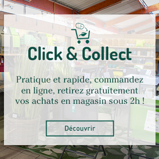 BlocConseil_click-collect