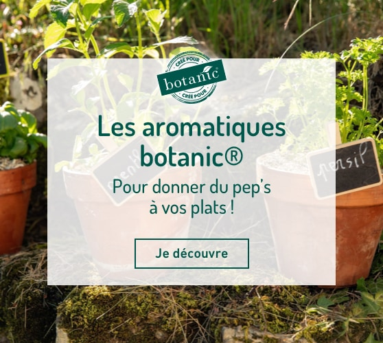 Edito_comment-choisir-ses-aromatiques