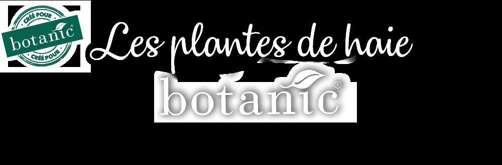 comment-choisir-ses-plantes-de-haie_10
