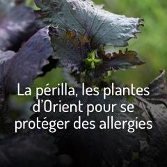 astuce-allergie-la-perilla
