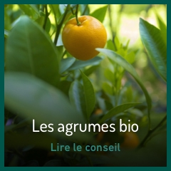 les-agrumes-bio