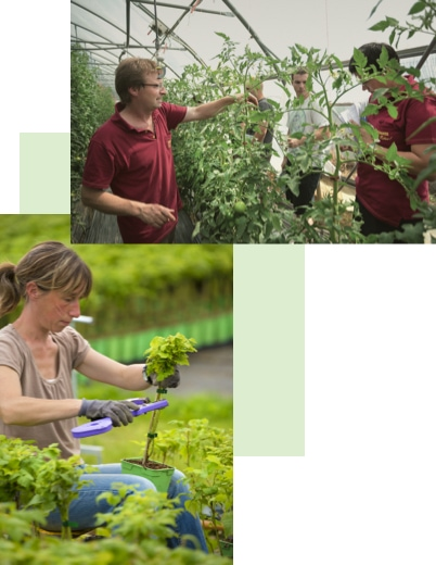 producteurs s-occupant de leurs plantations