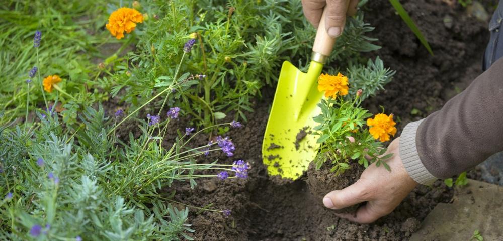 personne mettant en terre une plante