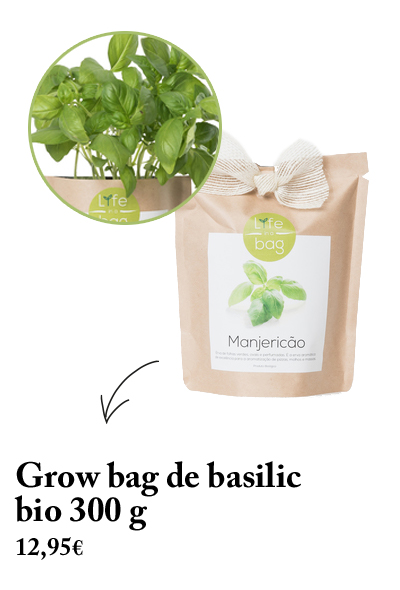 grow bag basilic