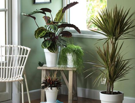 garantie-plante-facile-un-an_80