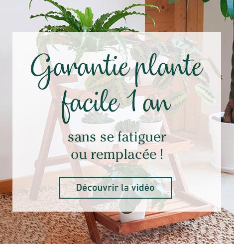 vidéo garantie plante facile