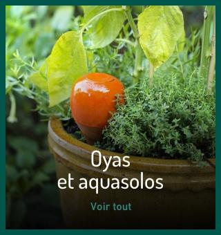Oyas et aquasolos