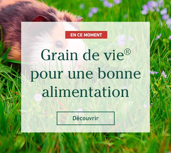 Edito_grain-de-vie