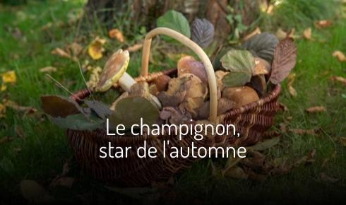 Le champignon, star de l'automne : de la forêt à l'assiette !