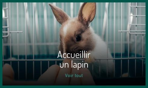 J'accueille un lapin