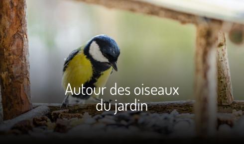 Autour des oiseaux du jardin