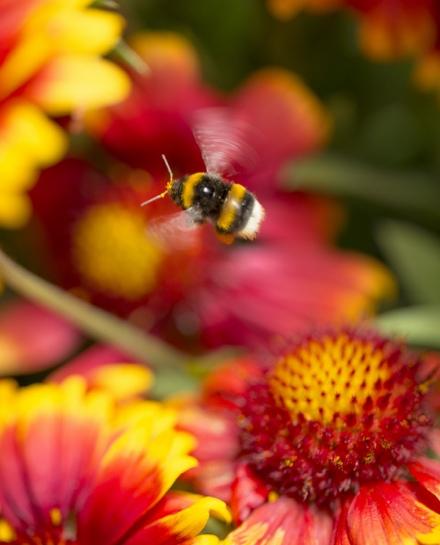 inviter-la-biodiversite_60