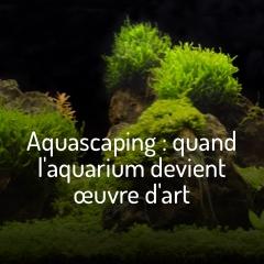 aquascaping-l-art-en-bac