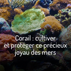 coraux-cultiver-l-alternative