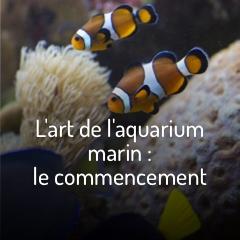 creer-un-aquarium-marin