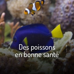 des-poissons-en-bonne-sante