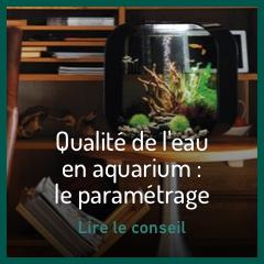 la-qualite-de-l-eau-d-un-aquarium