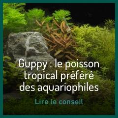 le-guppy