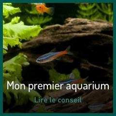 mon-premier-aquarium