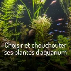 plantes-d-aquarium-bien-plus-qu-un-decor
