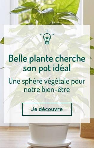 Belle plante cherche son pot idéal
