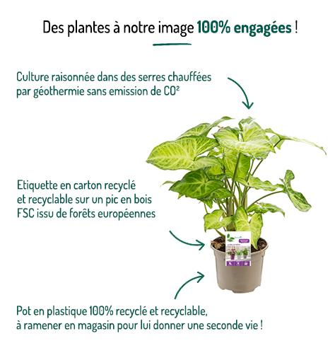 Engagements La Belle Verte