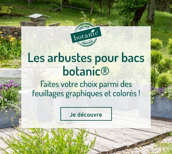 Edito_les-arbustes-pour-bacs-botanic