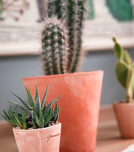 les-cactus-botanic_60