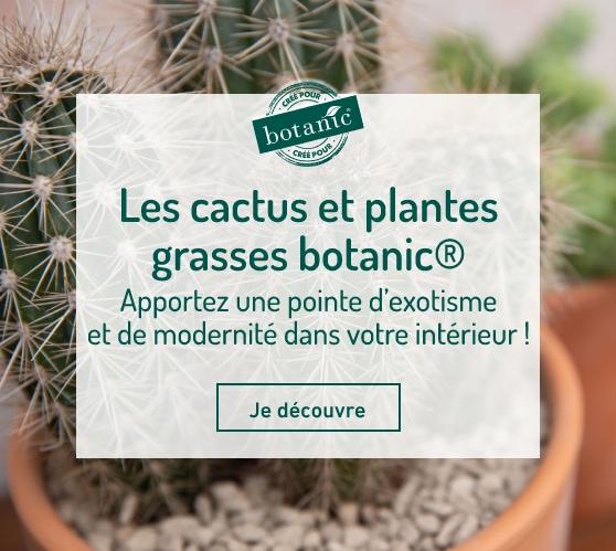 Edito_les-cactus-botanic