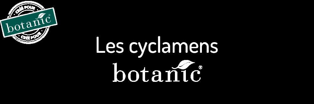les-cyclamens-botanic_10
