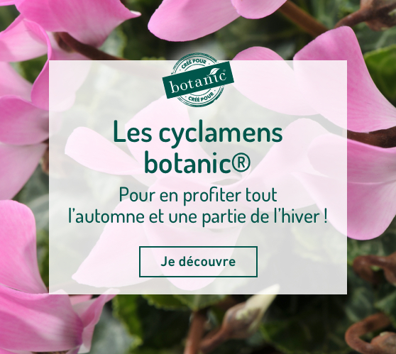Edito_les-cyclamens-botanic