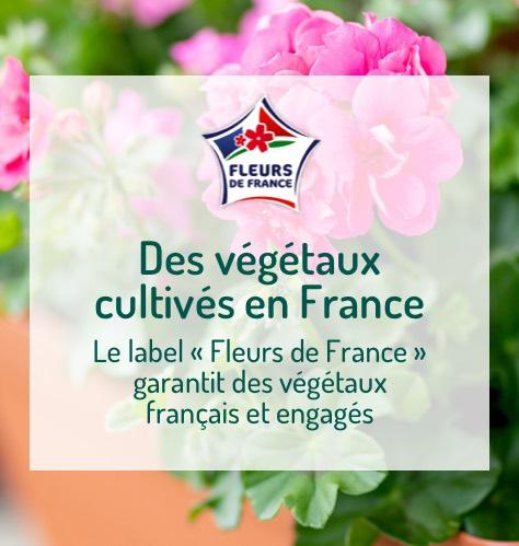 Des végétaux cultivés en France