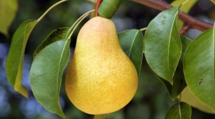 les-fruitiers-botanic_100