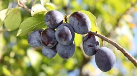 les-fruitiers-botanic_60