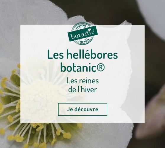 Edito_les-hellebores-botanic