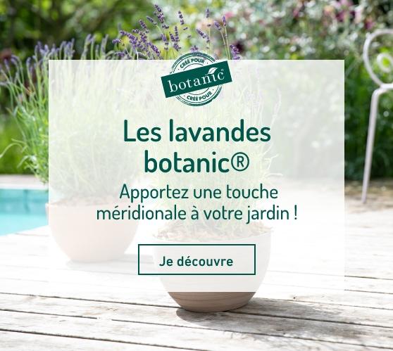 Edito_les-lavandes-botanic