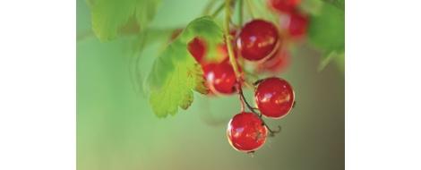 les-petits-fruits-botanic_60