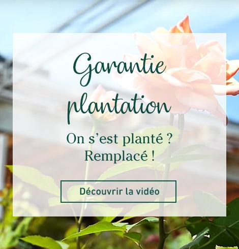 garantie plantation