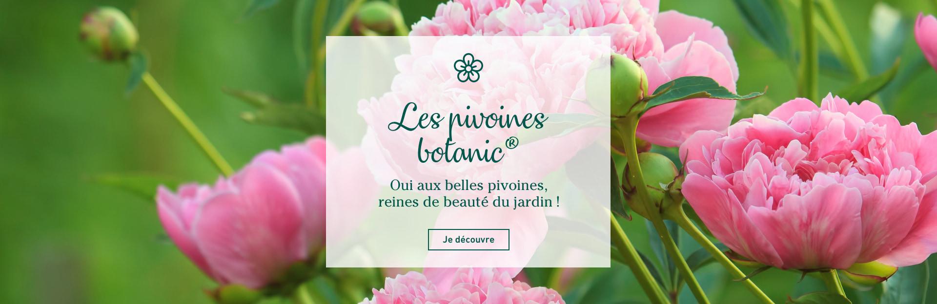 Les pivoines botanic®