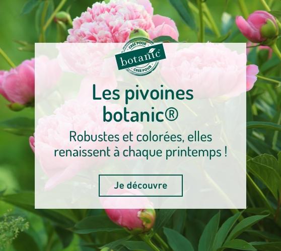 Edito_les-pivoines-botanic