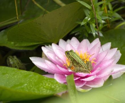 les-plantes-aquatiques-botanic_100