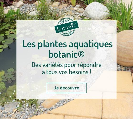 Edito_les-plantes-aquatiques-botanic