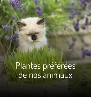 Plantes préférées de nos animaux