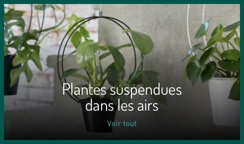 Plantes suspendues dans les airs