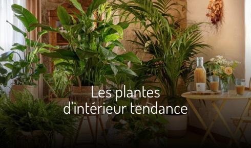 Les plantes d'intérieur tendance