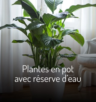 Plantes en pot avec réserve d'eau