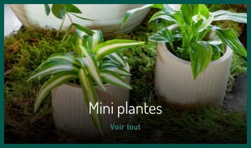 Mini plantes vertes et fleuries