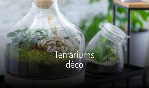 Terrariums déco