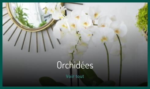 Orchidées