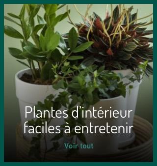 Plantes d'intérieur faciles à entretenir